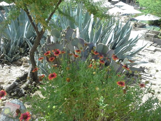 cactus and flowers, tuscon 2014