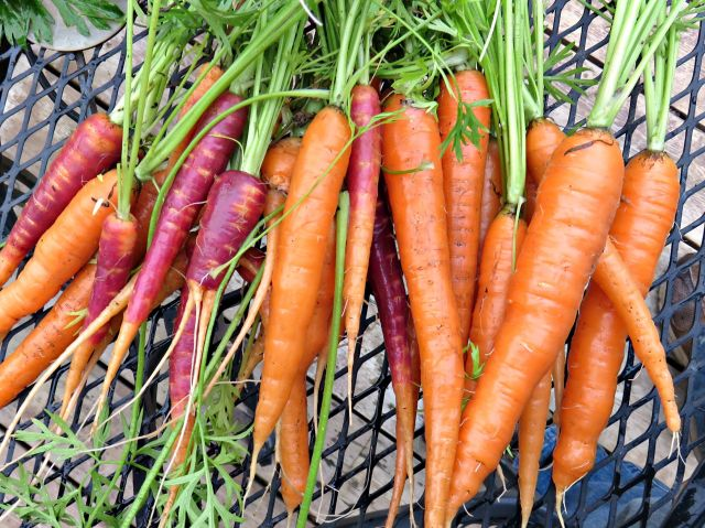 carrots 2015