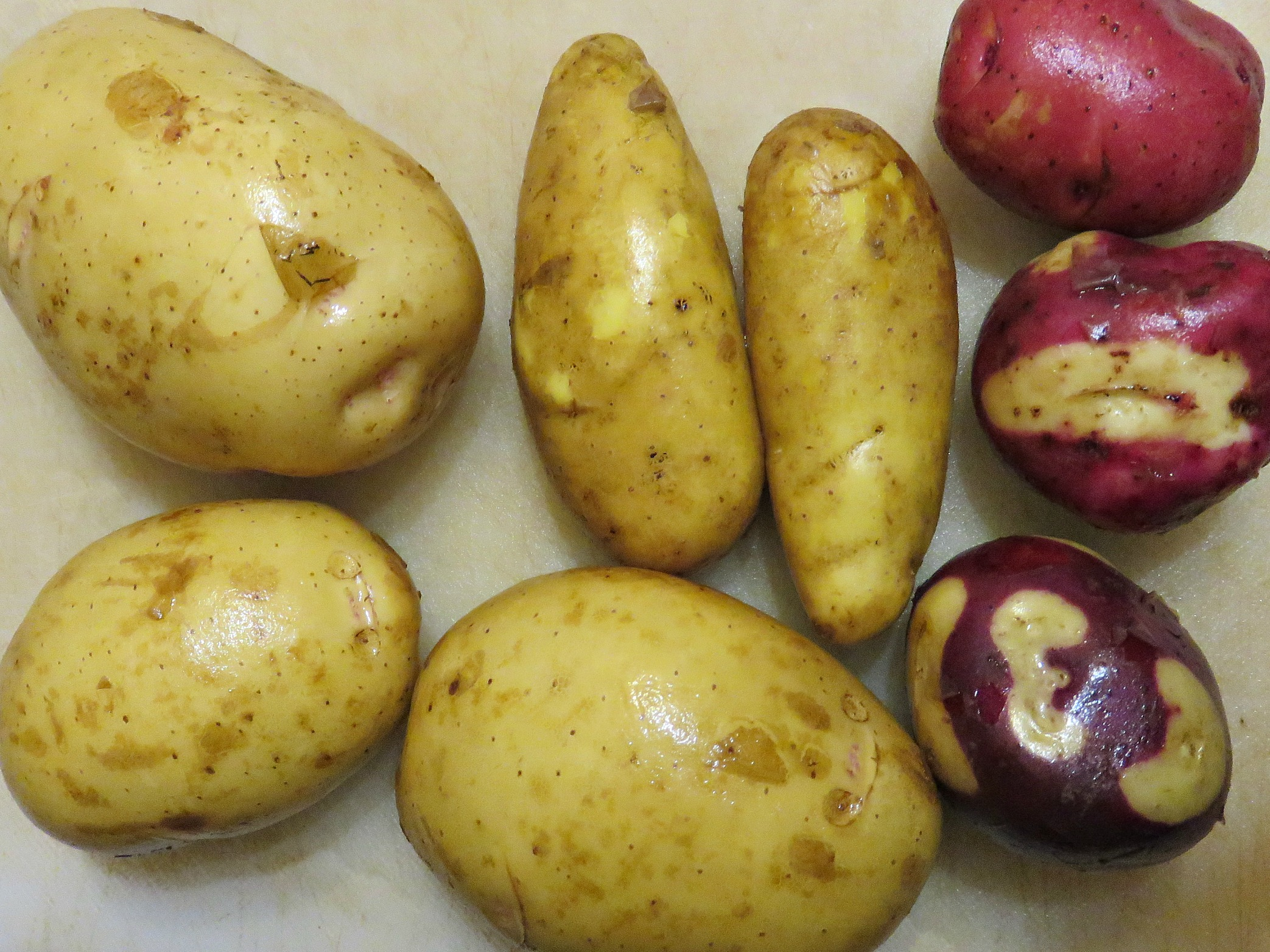 taters not cut 2015
